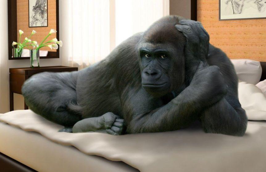 Gorilla lying on bed
